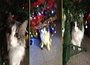 Cuccioli_Natale_Gatti