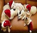 mondo-di-babbo-natale-amici-cuccioli-animali (1)