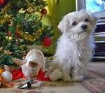 mondo-di-babbo-natale-amici-cuccioli-animali (7)