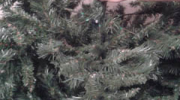 come-riporre-l'albero-di-natale-blog-miss-christmas-gatto (1)