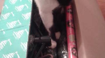 come-riporre-l'albero-di-natale-blog-miss-christmas-gatto (10)