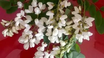 ricetta-babbo-natale-frittelle-fiori-di-acacia (4)